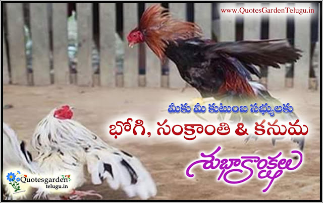 Sankranti Kodipandalu images with happy pongal Greetings images