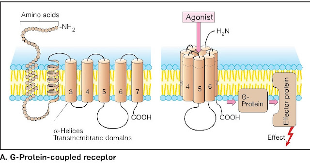 Drug-Receptor Interaction