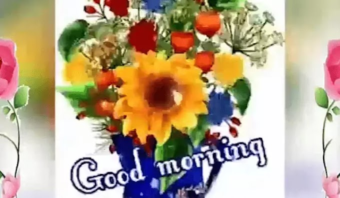 Best Good Morning WhatsApp Status Video Download