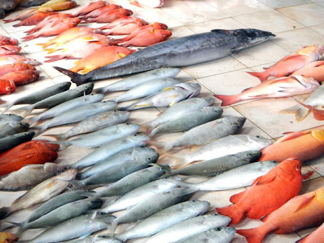 سوق السمك بمالي Male Fish Market