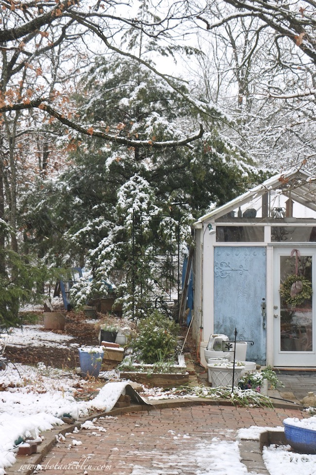 Branches of a large cedar tree sheltered the bare ground from snow next to the French Country garden shed
