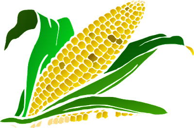 How to grow maize in Zambia
