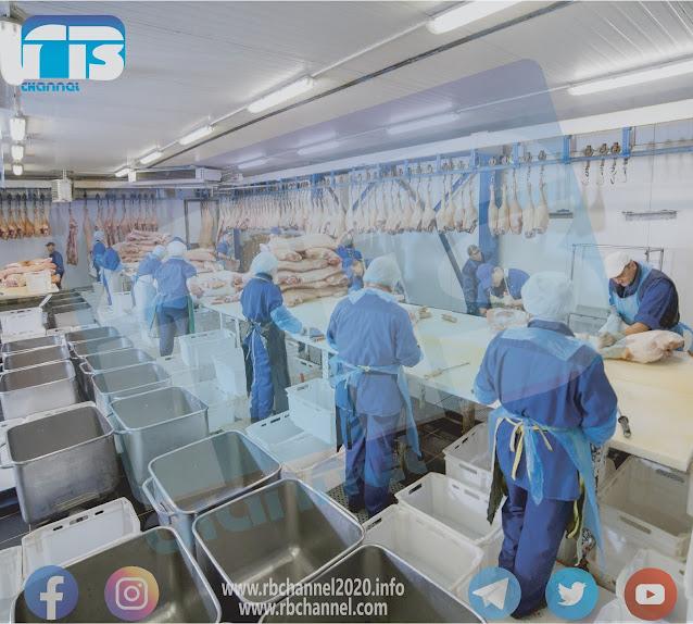 تصنيع اللحوم | المواد الرئيسية في صناعة اللحوم