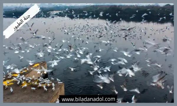 أفضل 10 أماكن السياحة في ازمير جنة الطيور