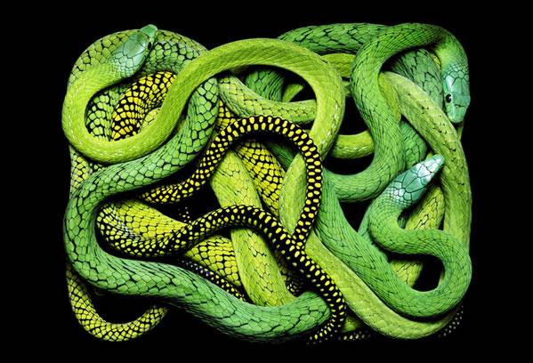 El Significado De Los Suenos Diccionario Libro Que Significa Soñar Con Serpientes O Viboras