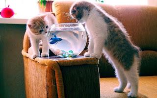 smiješna slika: mačke s ribama u akvariju