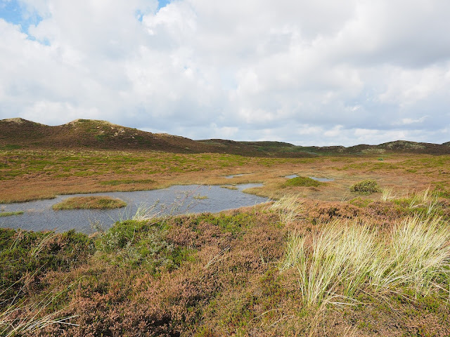 Dust fluxes recorded in peat reveal abrupt climate changes since the last deglaciation