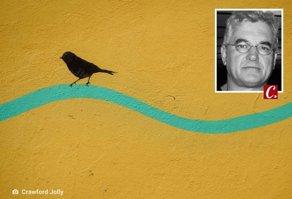 literatura paraibana passaros prisao aprisionamento liberdade gaiola lau siqueira