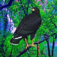 Games2rule-Black Hawk Esc…