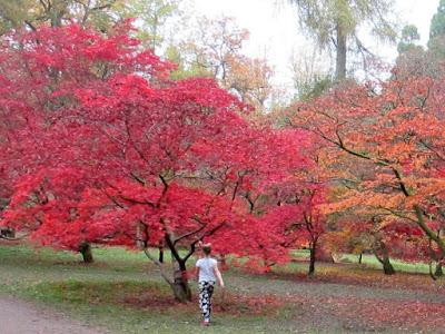 Westonbirt Arboretum Autumn gardens Green Fingered Blog