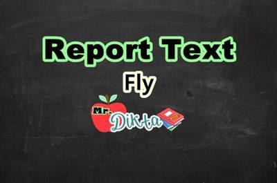 Contoh Report Text Singkat Tentang Lalat Beserta Artinya Contoh Text Bahasa Inggris Lengkap