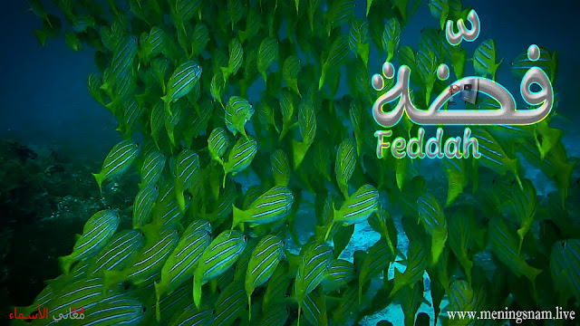 معنى اسم فضة, وصفات حاملة, هذا الإسم Feddah,