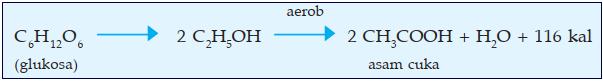 reaksi anaerob pada fermentasi asam cuka