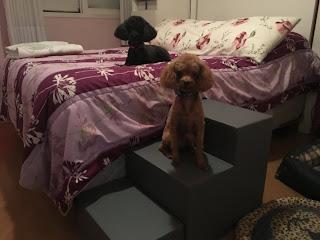 escadas para cães em camas altas