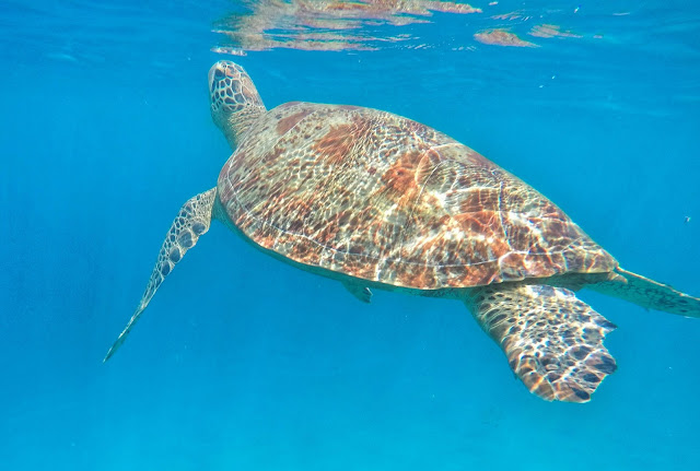 Sea Turtles of Pandan Island
