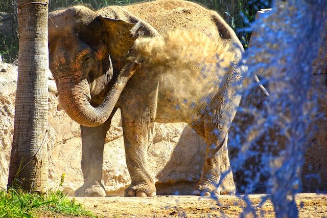 Elefanta Terra Natura
