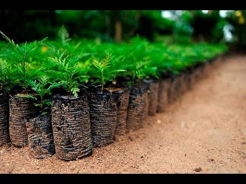 دراسة جدوى فكرة مشاريع زراعية مربحة فى مصر 2021
