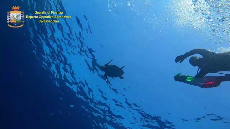 """""""AZZURRA"""" tartaruga marina rilasciata dalla Guardia di Finanza in mare aperto (VIDEO)"""