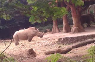 Badak, Extinction is Not Forever