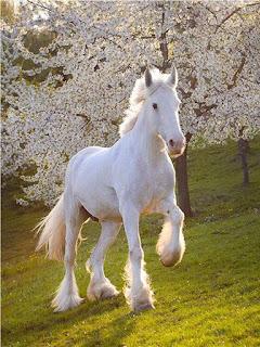 مشاهدة الحصان الأبيض في منام العزباء