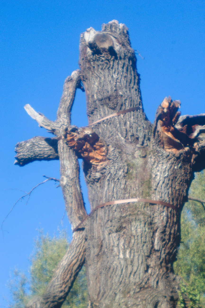 Zum Tagesabschluss — Was es in Tübingen nicht alles so gibt, ein verzurrter Baum zum Beispiel