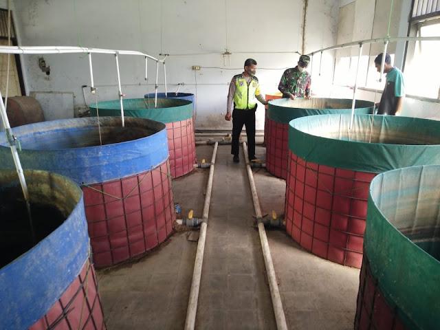 Koramil Cawas Dukung BUMdes Kembangkan Ternak Lele