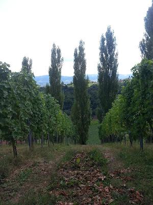 Südsteirische Weinstrasse