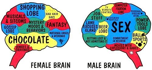 Male Brain Female Brain
