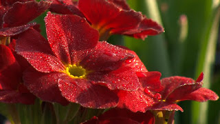 Gardening and Horticulture 04-2015