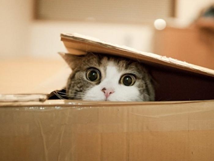 小貓躲在空箱子