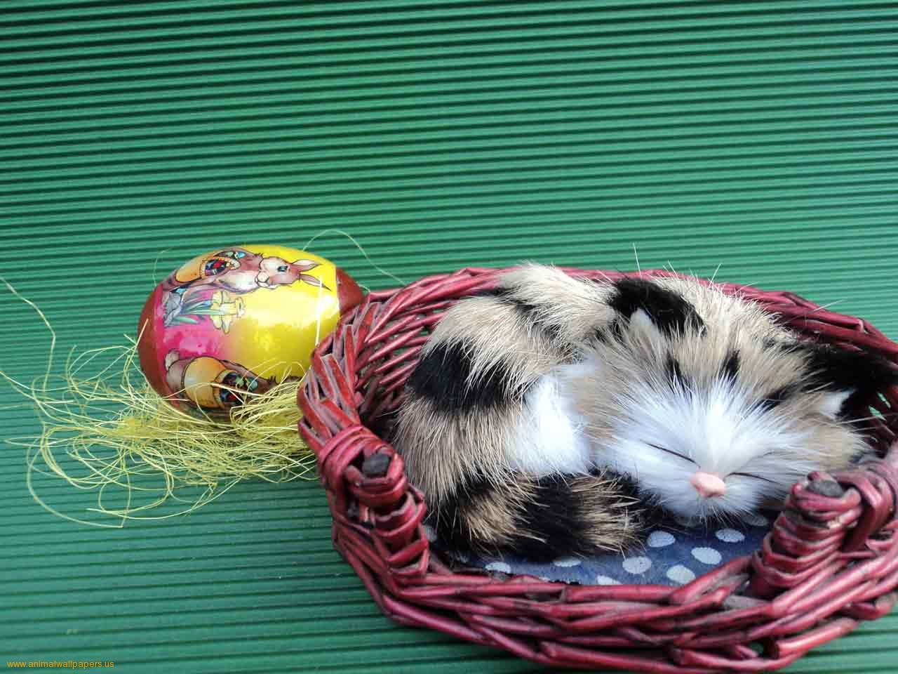 easter backgrounds cat images - photo #26