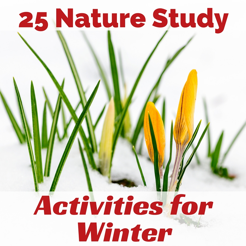 25 Nature Study Activities for Winter