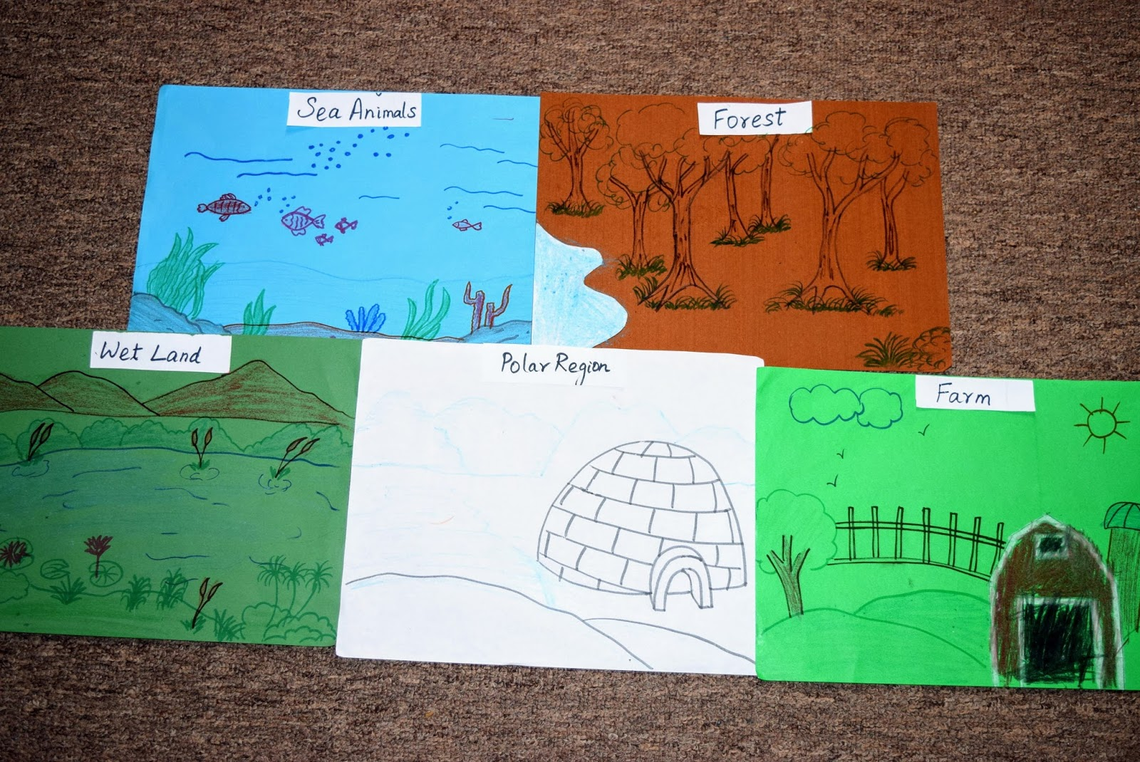 Sindhu S Cocoon Animals And Habitats