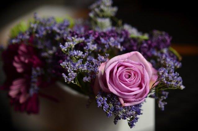 gambar bunga mawar ungu cantik