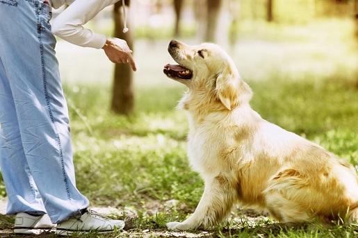 Spacer z psem po lesie