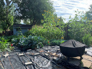 Fire pit covered, during the day, with ten foot tall sunflowers