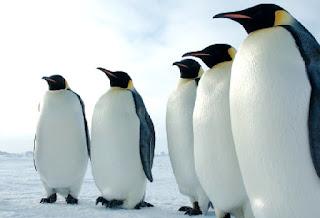 تفسير رؤية البطريق في منام الحامل