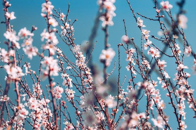 A flor da esperança