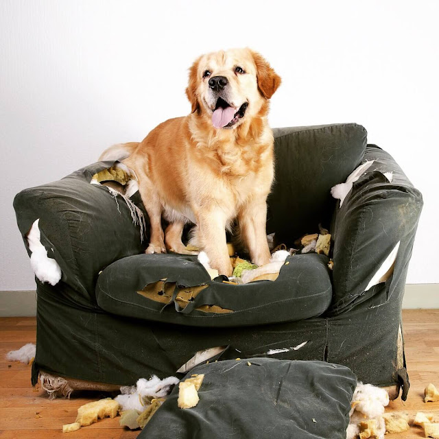 Why Do Dogs Dig In The Bed? A Comprehensive Guide To Dog Behavior
