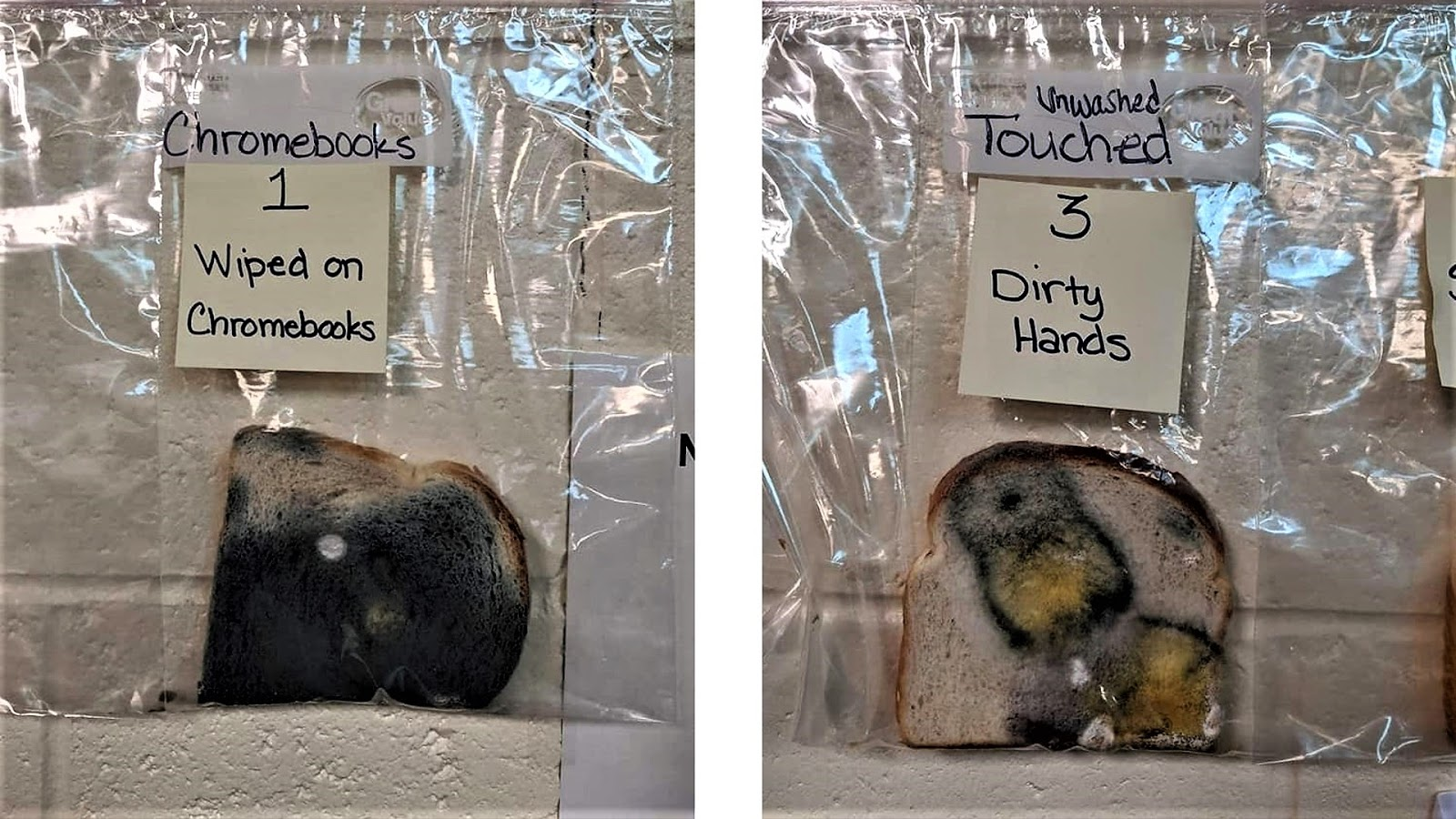 On the left is a slice of bread used to wipe laptops. On the right is a slice that children touched with dirty hands.