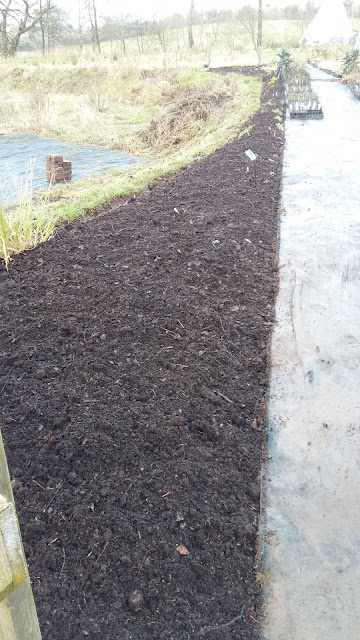 One of the borders in the nursery with its  compost mulch