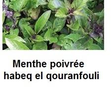 menthe est carminative aide à l'expulsion des gaz intestinaux
