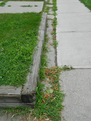 Upper Beaches Toronto front yard cleanup before by Paul Jung Gardening Services