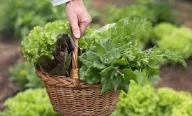 keunggulan sistem pertanian organik