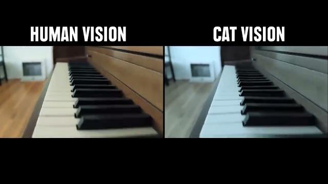 Penglihatan Kucing