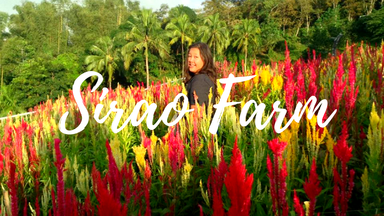 Sirao Flower Farm – Little Amsterdam of Cebu Exotic Philippines travel blog Cebu blogger vlog vlogger