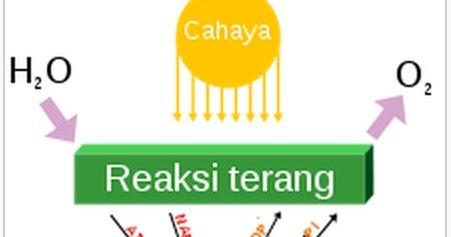 Rumus Kimia Fotosintesis Rumus Kimia