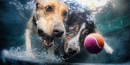 Ferocious Underwater Dogs