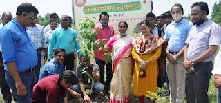 स्वच्छ वातावरण के लिए पेड़ लगाना जरूरी : कुलपति   #NayaSaberaNetwork