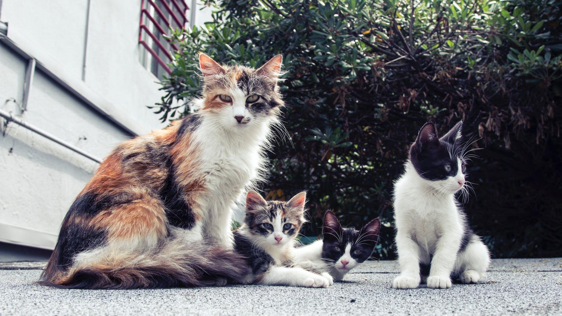 Découvrez les différentes races de chats